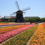 하우스텐보스-꽃축제