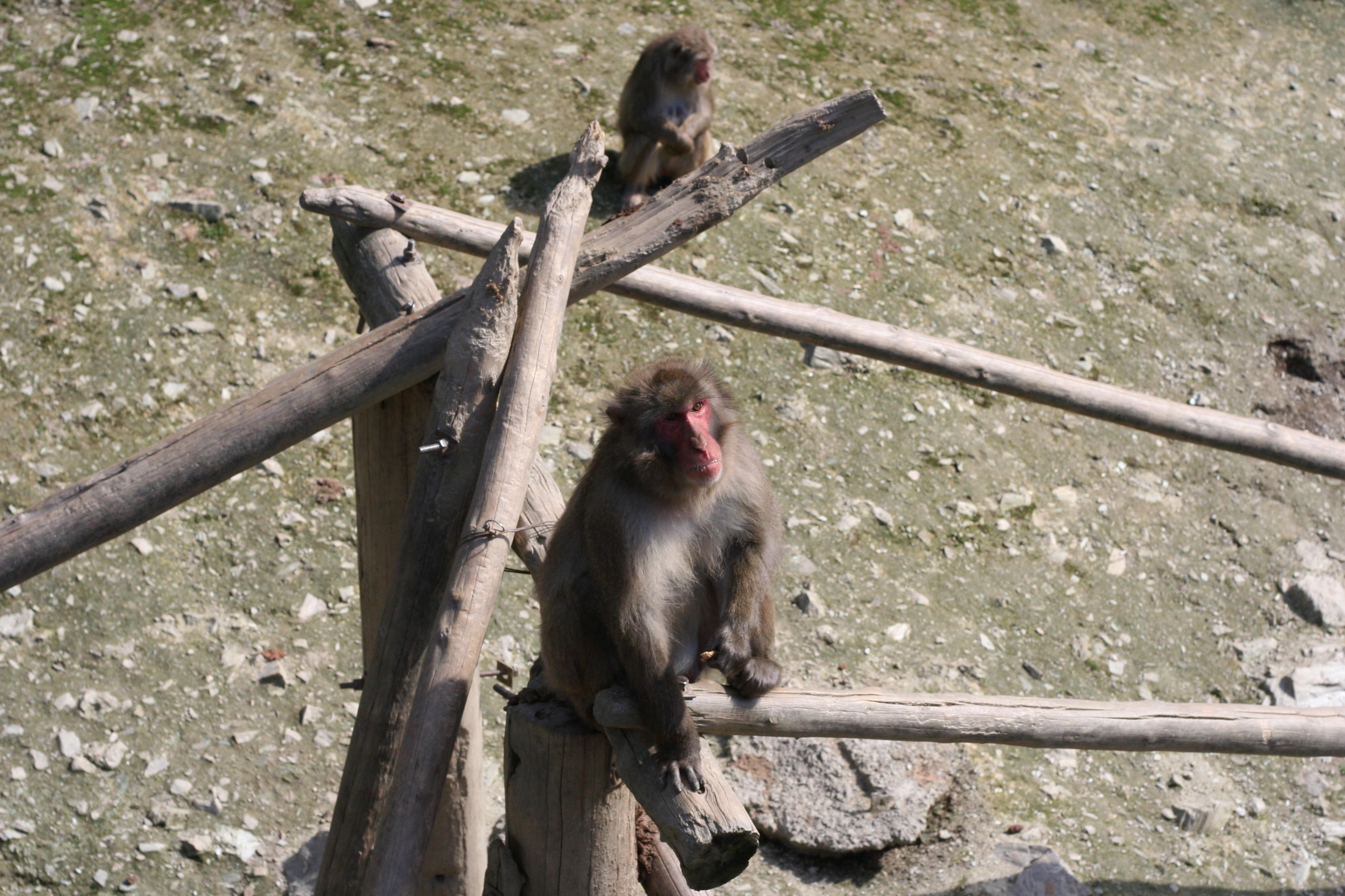 호도산동물원-원숭이